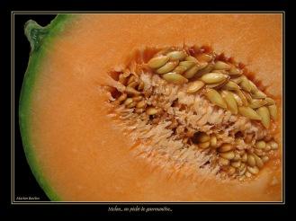 CP-Img_1057-melon
