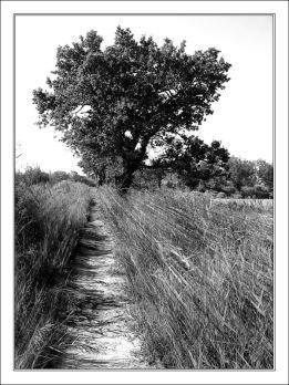 CP-IMG_1186-sentier des plaines N&B FR