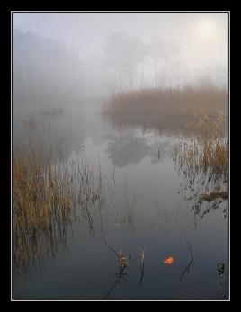 CP-IMG_2700+2713-feuille sur le lac