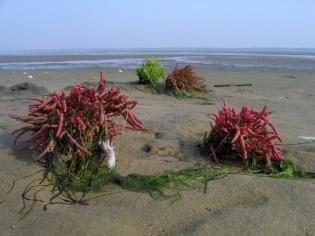CP-IMG_5946-algues vertes et rouges