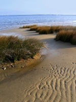 CP-IMG_5973-sable, herbes, Bassin 0