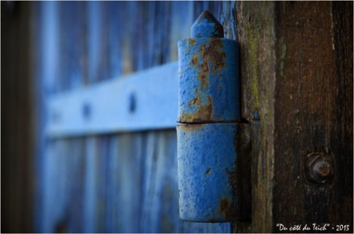BLOG-DSC_20133-gond volet bleu