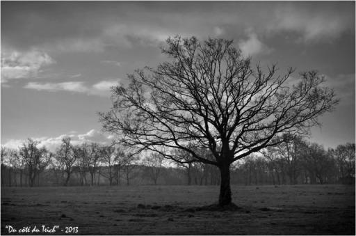 BLOG-DSC_20314-arbre sous la pluie N&B