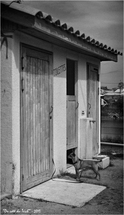 BLOG-DSC_20995-chien à la porte des WC Taussat N&B1