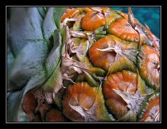 CP-IMG_3725-ananas