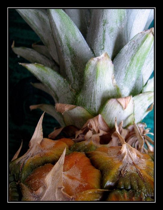 CP-IMG_3726-ananas