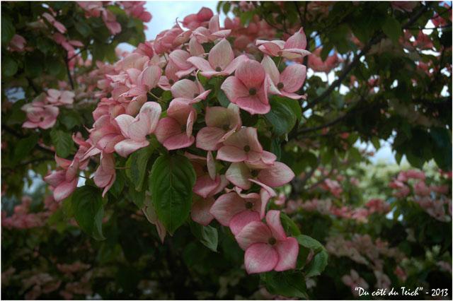BLOG-DSC_2158- jardin botanique Bordeaux Bastide