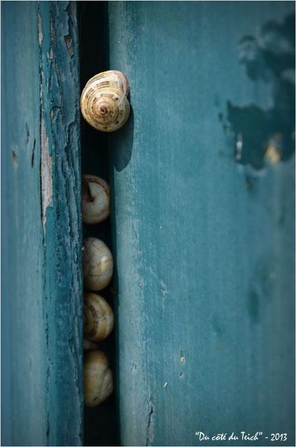 BLOG-DSC_22733-escargots volet cabane le Canon