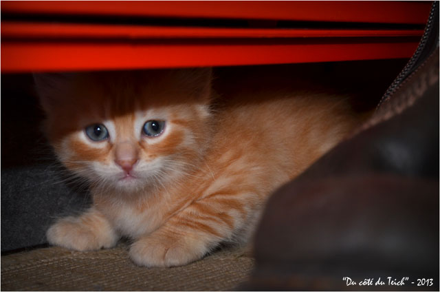 BLOG-DSC_22751-chaton roux