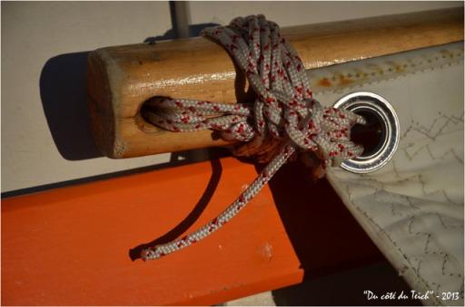 BLOG-DSC_23094-pinassotte l'Audengeoise