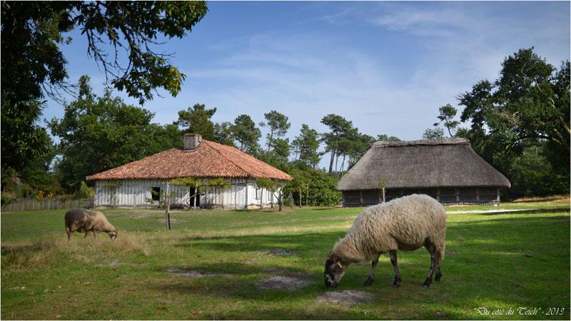 BLOG-DSC_25271-maison de maître borde et moutons airial Marquèze 2