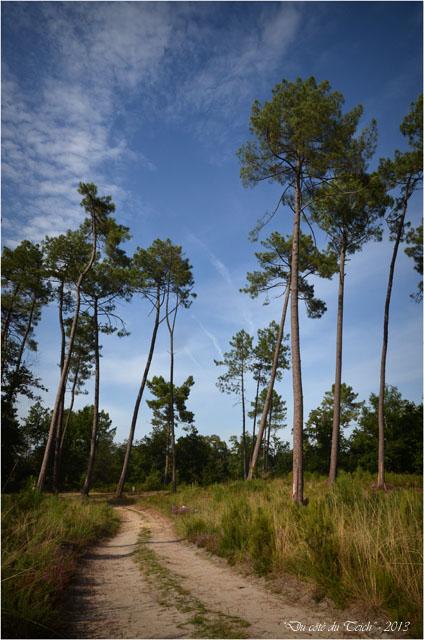 BLOG-DSC_25357-forêt Marquèze
