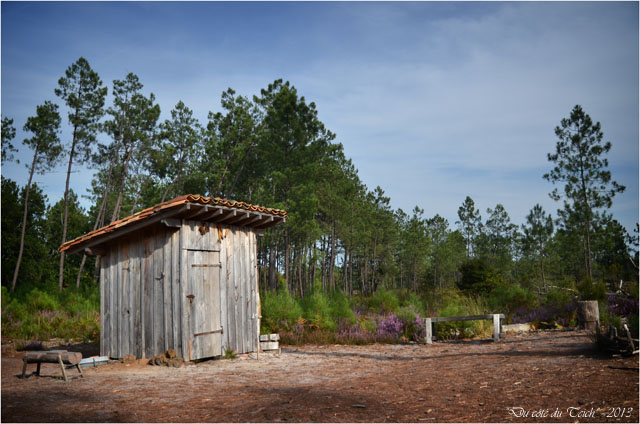 BLOG-DSC_25366-cabane du gemmeur forêt Marquèze