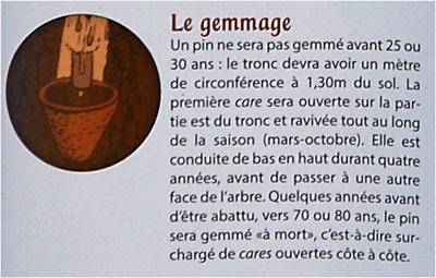 BLOG-DSC_25472-visite Marquèze-description gemmage
