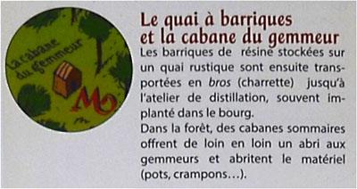 BLOG-DSC_25472-visite Marquèze-description quai à barriques et cabane du gemmeur