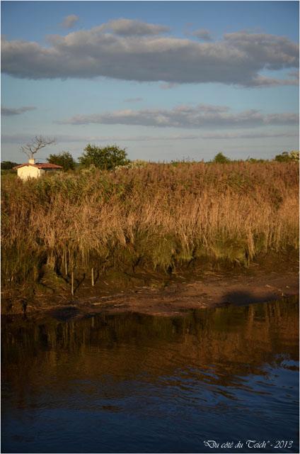 BLOG-DSC_25782-Leyre sentier le Teich