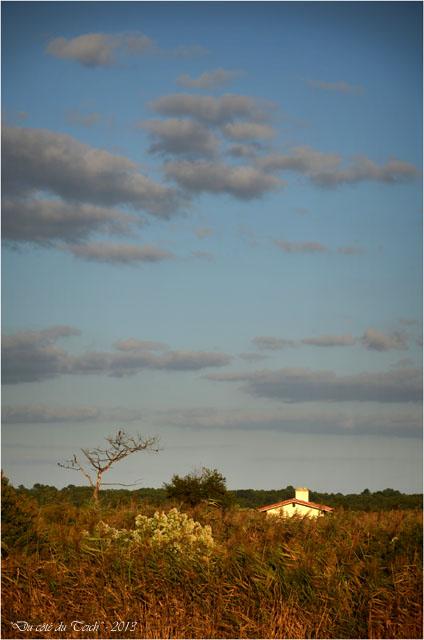 BLOG-DSC_25785-leyre sentier le Teich