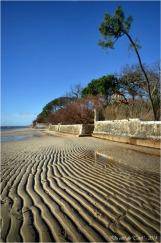 BLOG-DSC_26561-plage Taussat