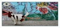 BLOG-cp-dsc_6877-panoramique-tag-chien