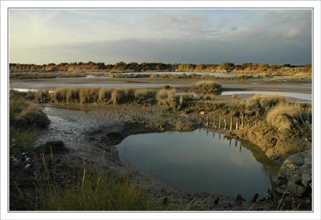BLOG-DSC_0334-chenal Graveyron Certes marée basse