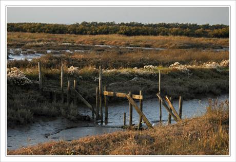 BLOG-DSC_0378-chenal proche Bassin
