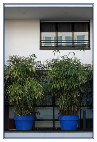 BLOG-DSC_0415-bambous résidence ostréa