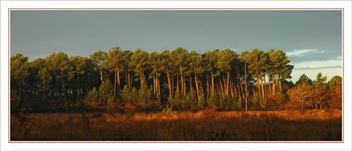 BLOG-DSC_0418-rec-lumière matinale forêt en face