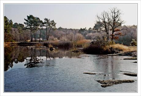 BLOG-DSC_0436-étang du Teich semi-gelé