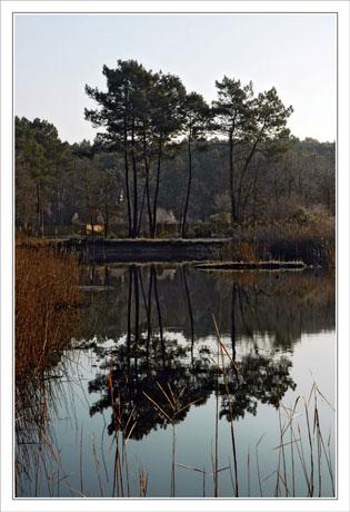 BLOG-DSC_0437-pins étang