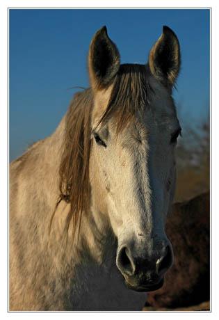 BLOG-DSC_0557-cheval blanc sentier Ouest