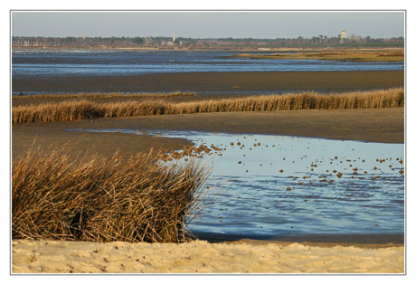 BLOG-DSC_0570-zoom plage et Audenge