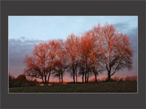 BLOG-DSC_0748-arbres rouges + cadre