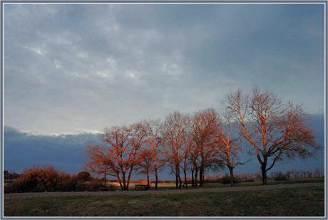 BLOG-DSC_0754-chênes soleil levant