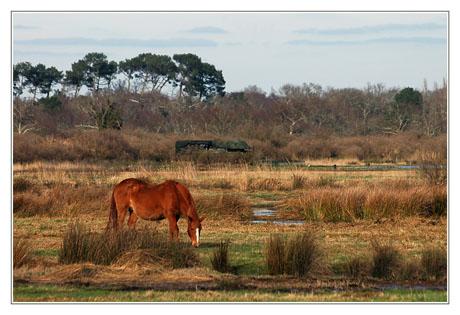 BLOG-DSC_0807-cheval roux des plaines 2