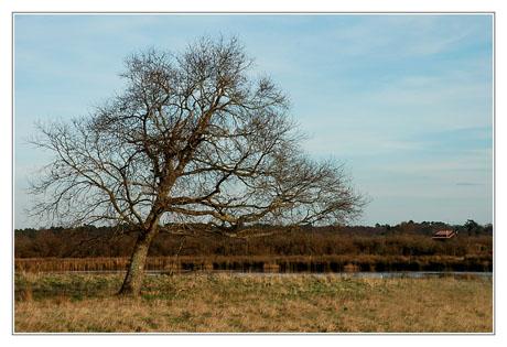 BLOG-DSC_0852-chêne et maison des plaines