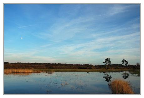 BLOG-DSC_0875-étang et pins des plaines