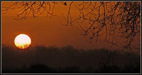 BLOG-DSC_1072-branches et soleil