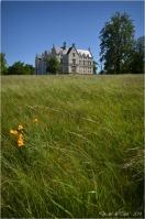 BLOG-DSC_28395-herbes folles château domaine de Grenade