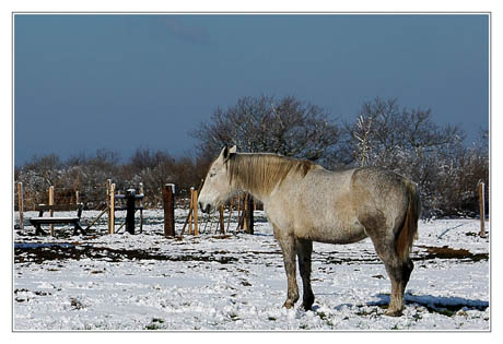 BLOG-DSC_4349-rec-cheval blanc