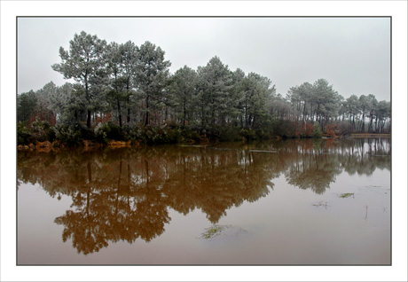 BLOG-DSC_4456-étang de Balanos