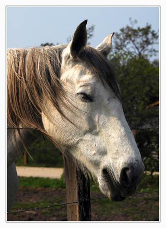 BLOG-DSC_5923-cheval blanc sentier Ouest