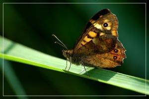 BLOG-DSC_7372-papillon