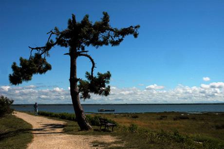 BLOG-DSC_8058-pin et sentier du littoral Cassy 1
