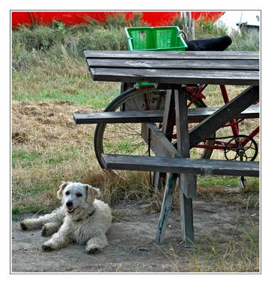 BLOG-DSC_8710-chien et vélo pêcheur