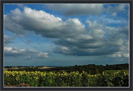 BLOG-DSC_9057-nuages & tournesols