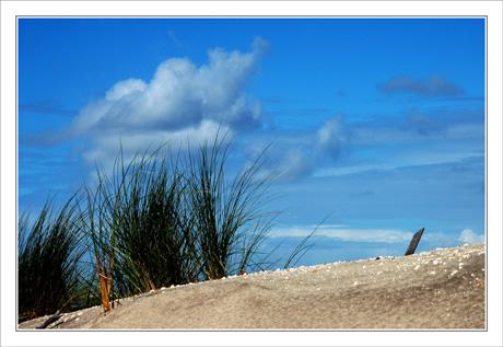 BLOG-DSC_9564-oyats plage du petit Nice