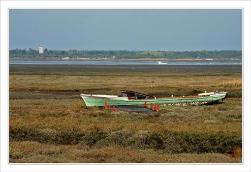 BLOG-DSC_9678-plate, herbiers, Audenge marée basse