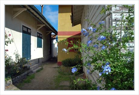 BLOG-DSC_9962-plumbago & maisons