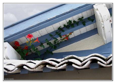 BLOG-IMG_0971-toit bignone Hortense Cap-Ferret