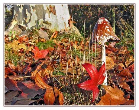 BLOG-Img_1943-champignon forêt Malakoff